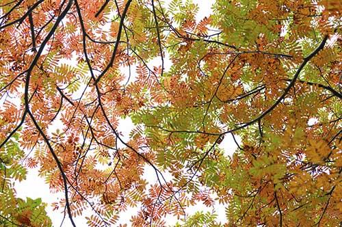 طرح آسمان مجازی درختان پاییزی  6-As