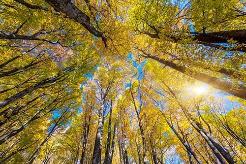 طرح آسمان مجازی درختان پاییزی  7-As